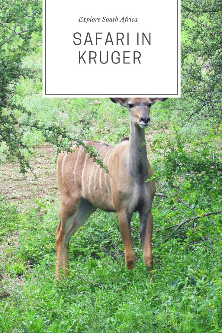 Pinterest_kruger