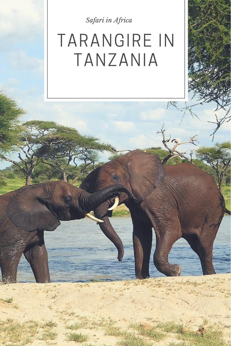 Safari in Tarangire park in Tanzania