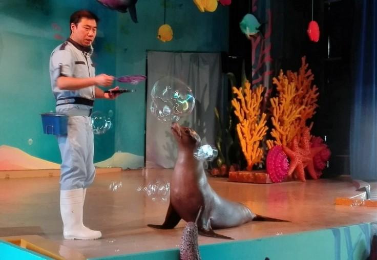 Show with Sea Lions at Ocean Park, Hong Kong