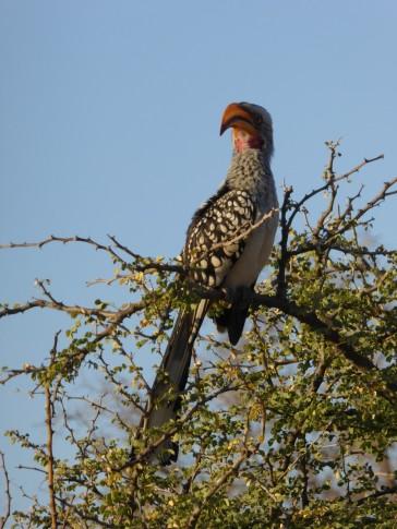 Bird in Pilanesberg
