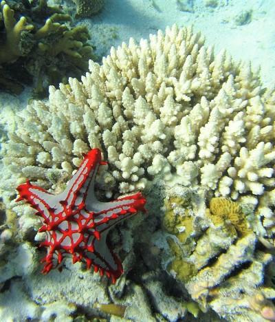 Snorkeling in Paje, Zanzibar