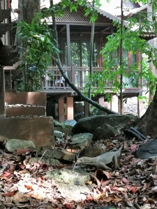 Berjaya Langkawi resort - monitor lizard